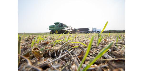 Cargill introduces new revenue stream for farmers
