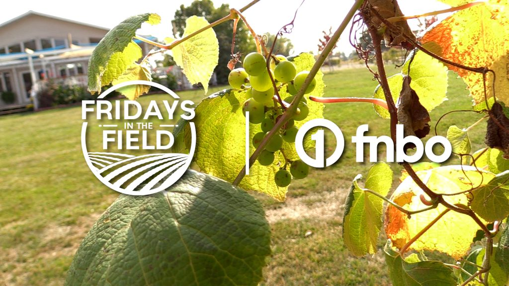 Fall favorites at Mac's Creek Winery | 2021 Fridays in the Field | Ep. 22