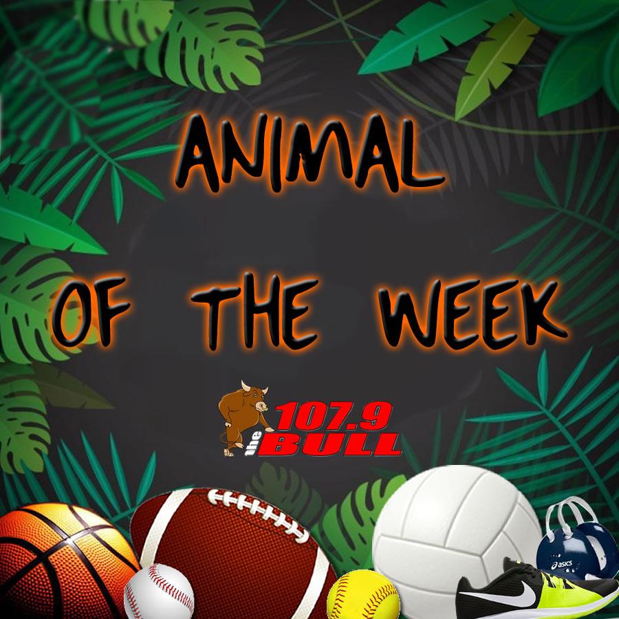 Animal of the Week 9/15/21