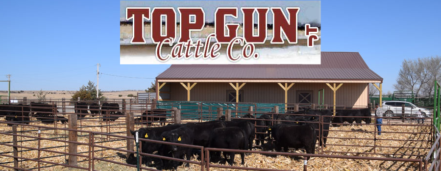 Top Gun Cattle Co.