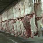 Beef prices picking up & react to USDA reports