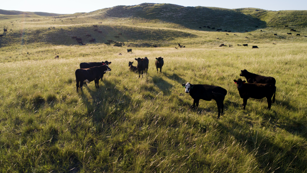 CattleFax cow-calf survey released