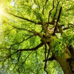 Three words for trees and shrubs right now: Water, Water, Water