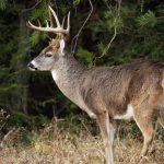 Don't forget to sight-in firearms before deer season