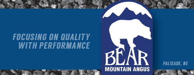 Bear Mountain Angus