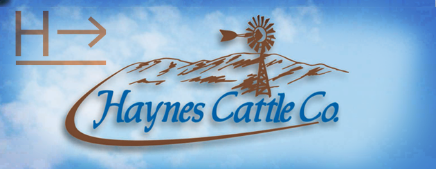 Haynes Cattle Co