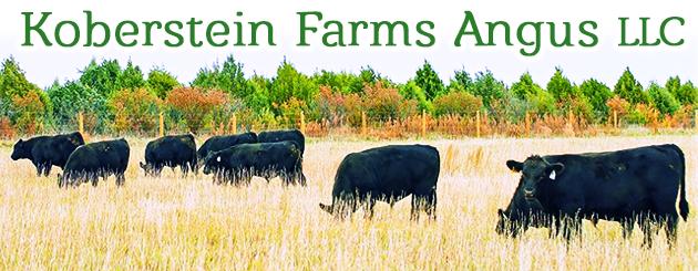 Koberstein Farms Angus LLC