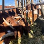 Weekly sheep and goat market report
