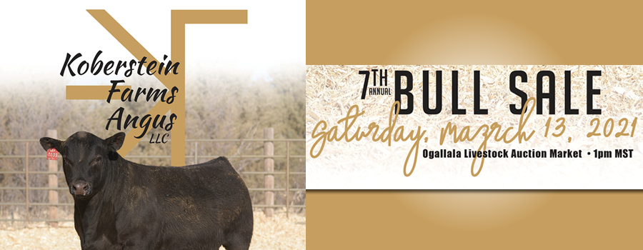 Koberstein Farms Angus Bull sale 2021