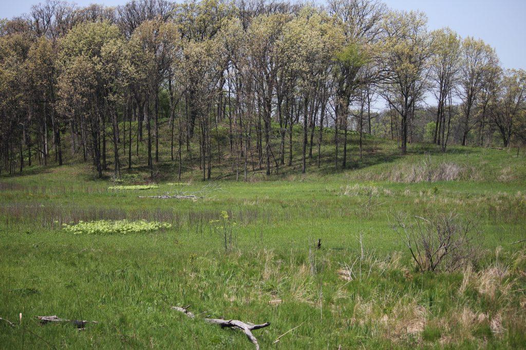 Extension study seeks ranchers' input on grassland conservation programs