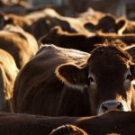 Nebraska Brand Committee to implement waivable citations