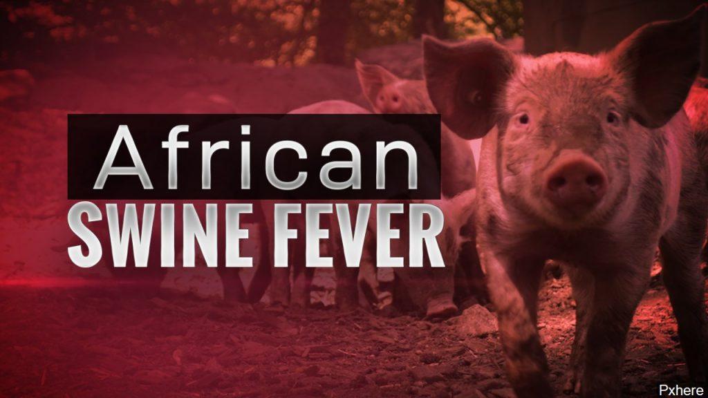 African Swine Fever Confirmed in Haiti