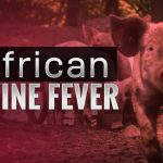 Rep. Cindy Axne Urges House Leadership to Fund African Swine Fever Prevention Efforts