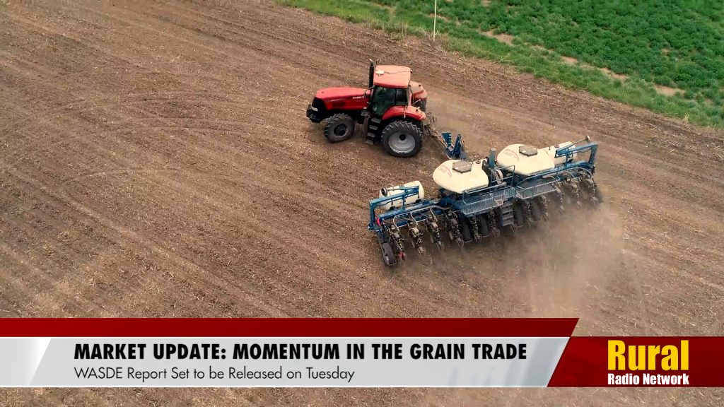 Market Update: Continued Momentum in the Grain Trade