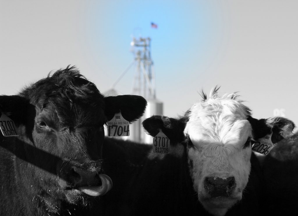 April cattle on feed report with Kyle Bumsted