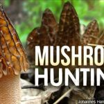 Morel mushroom season has begun in Nebraska