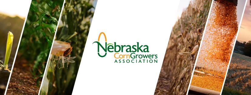 Nebraska Corn Growers Association announces winners of 2021 FLAGship program