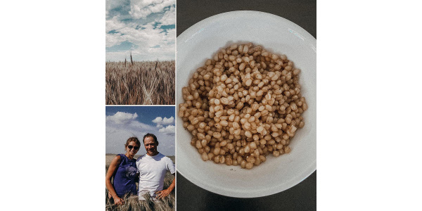 Growing wheat like wine