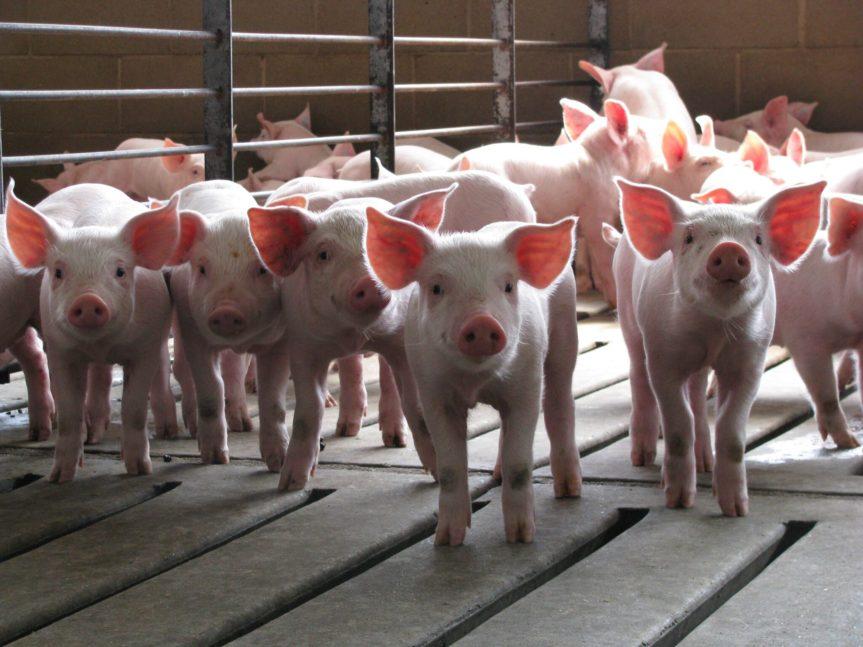 World Pork Expo showcases top pork priorities