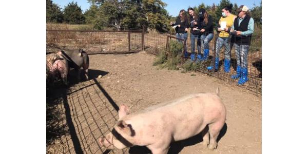Livestock Judging Camp is May 26-27