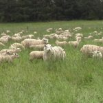 Input needed on Targeted Grazing Survey