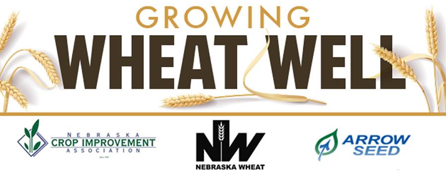 Growing Wheat Well
