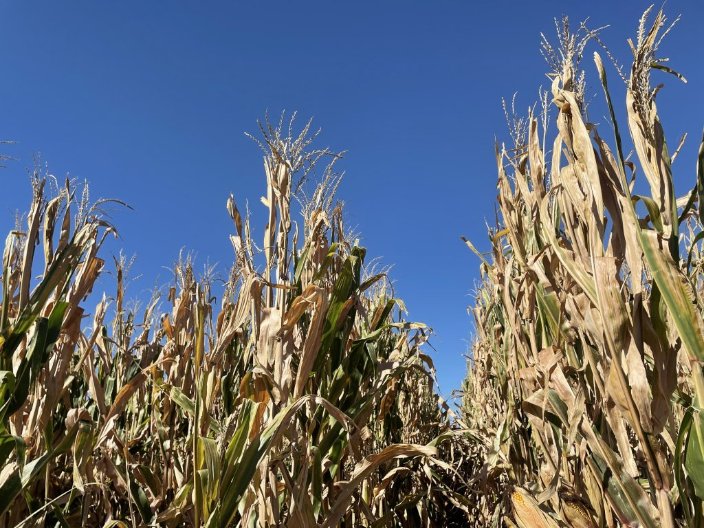 Weekly Market Roundup 10|22|21 Brought to you by the Nebraska Soybean Board