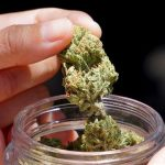 State cannabis lobbying group forms even as drug's illegal