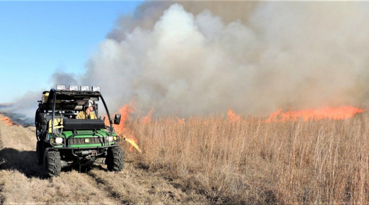 Saving the Great Plains with prescribed fire, mixed grazing