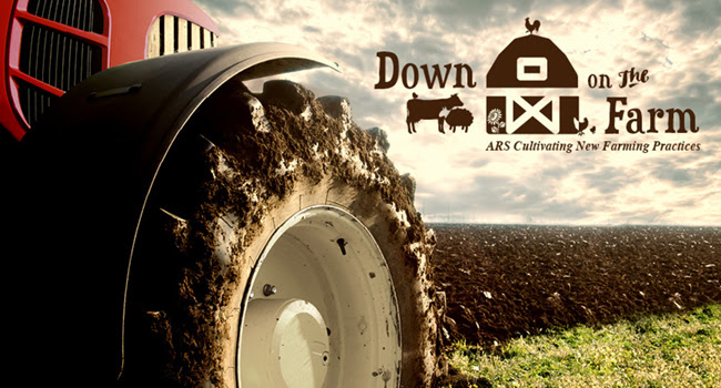 ARS Scientist Highlights Till vs. No-Till Farming