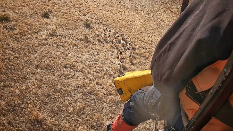 Collaborative Research Project Tracks Pronghorn in Panhandle