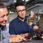 Nebraska Engineering Students Craft Prosthetic for Cat
