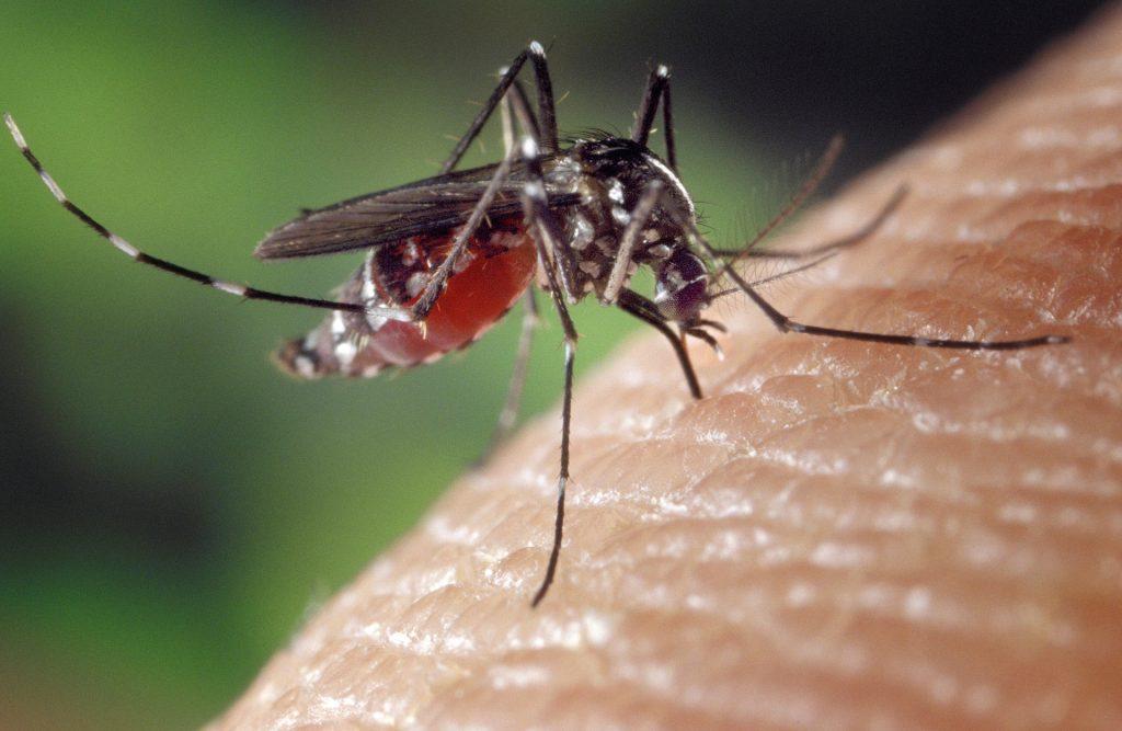 West Nile Virus Claims Two Lives in Eastern Nebraska