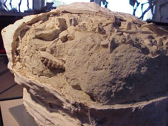 """Agate Fossil Beds National Monument """"Falls Back"""" Into Winter Visitor Center Hours"""