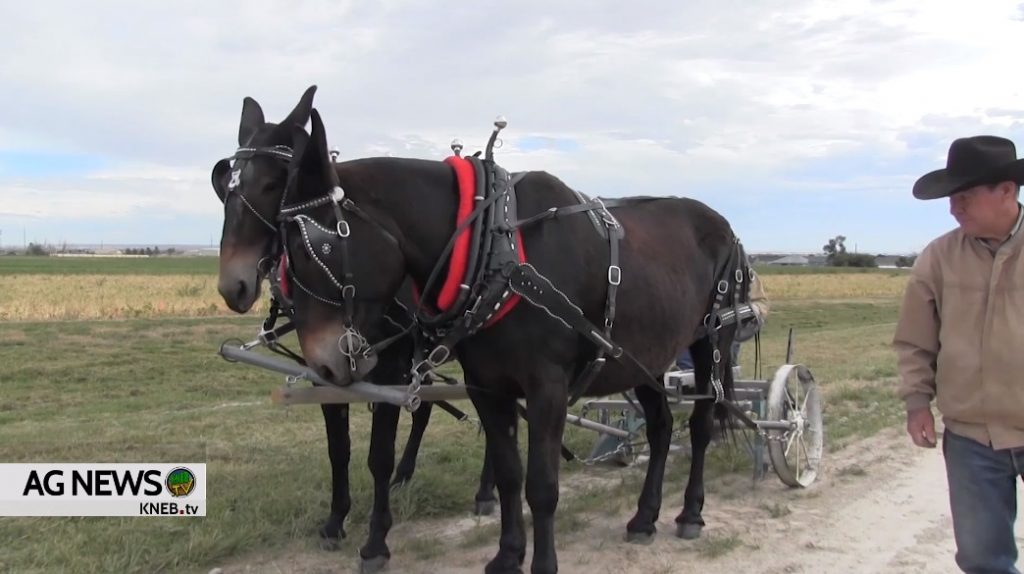 25th Annual Harvest Festival Coming to Gering's Legacy of the Plains Museum