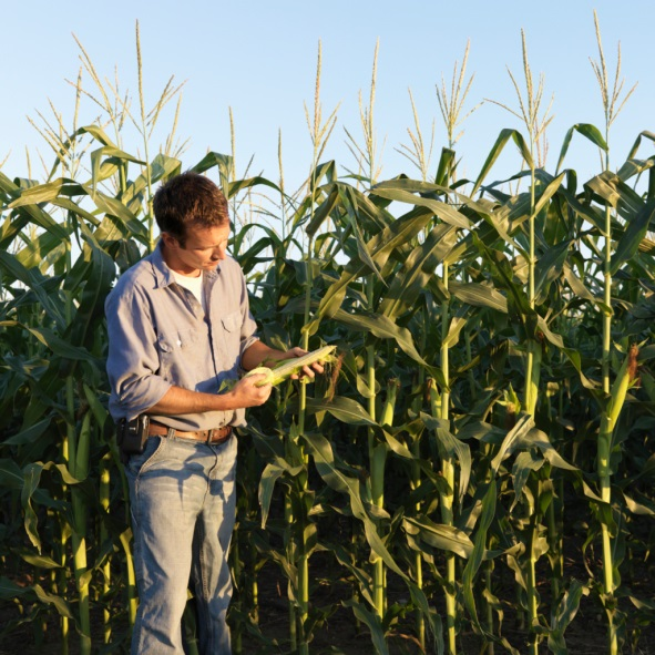 Nebraska Extension to host 2021 Introductory Field Crop Scout Training on May 11th