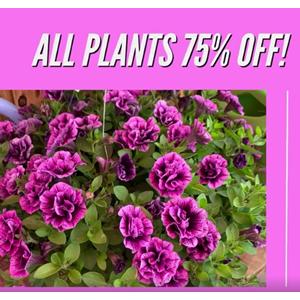 Stan Ortmeier 75% off Plants
