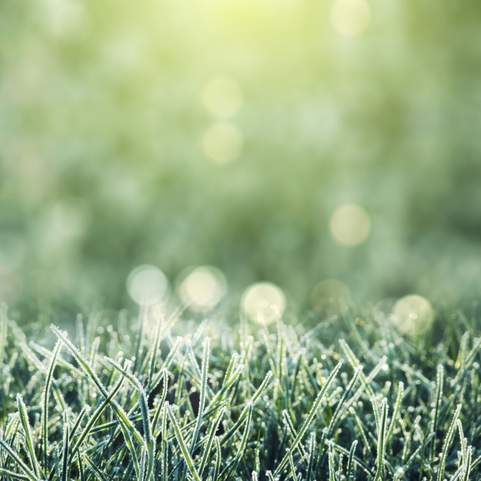 K-State Turfgrass Specialist Urges Mid-Summer Checkup on Lawns