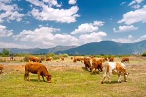 USCA Submits Comments Supporting BLM's Targeted Grazing Project