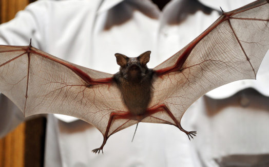 Bat caught in Wisner tests positive for Rabies