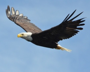Central's Eagle-viewing Facilities Won't Be Open This Year