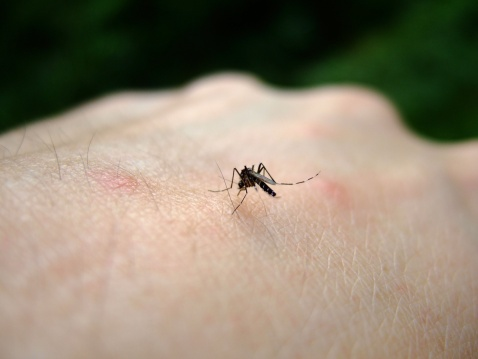Human cases of West Nile Virus for 2020 reported to DHHS