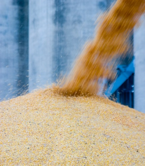 China Corn Imports Hit All-Time High