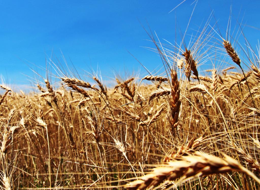 State winners of National Wheat Yield Contest