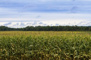 Applications Due Jan. 24 for Class IV of Nebraska Corn Growers Association's PRIME Program