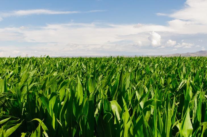 Nebraska Farmers Sue Monsanto Over Cancer