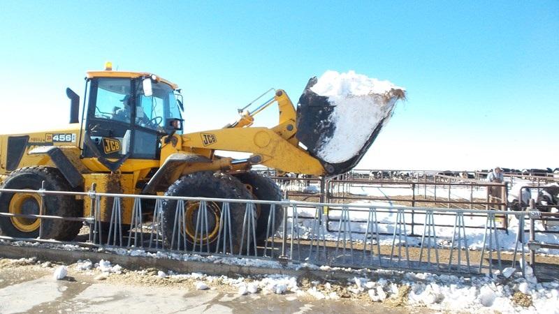 Texas Dairy Industry Still Reeling from Winter Storm Goliath