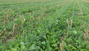 2019 Grazing Cover Crops Workshops