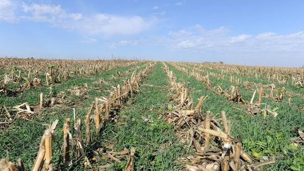 Cover Crops Looked To Help Farmers In 2019