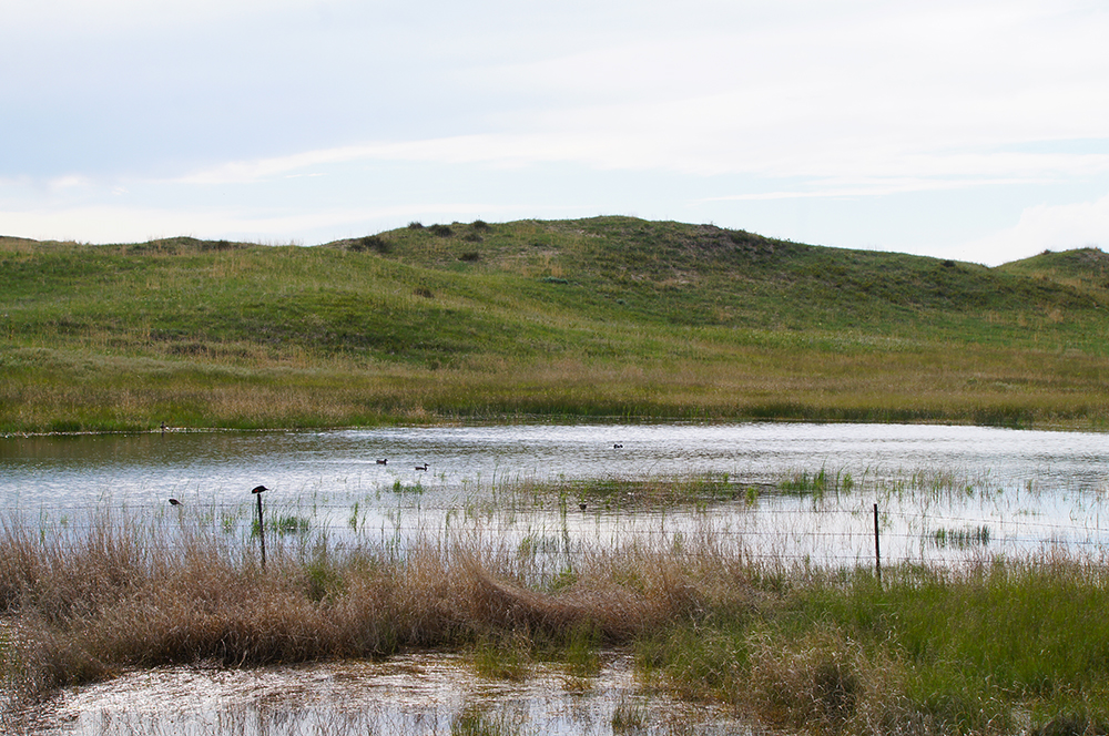 USDA Providing Funds to Protect and Restore Agricultural Working Lands, Grasslands and Wetlands across Nebraska